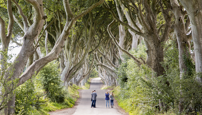 See the Dark Hedges on a day trip from Dublin